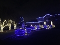 Christmas Lights 1397